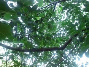 Il verde che ispira l'anima, la scrittura, il riposino pomeridiano...
